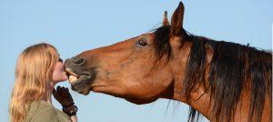pferde krankenversicherung