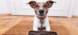günstige Hundehaftpflicht_hund