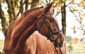 pferde,versicherung, PferdeVersicherung, Uelzener, op, haftpflicht