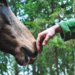 pferde,versicherung, op Versicherung, Uelzener, pferde op Versicherung