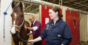 pferde,versicherung, op Versicherung, Uelzener, pferde op Versicherung, Pferdeversicherung